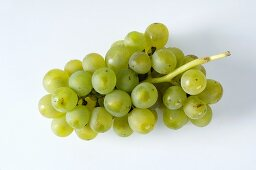 Green grapes, variety Müller-Thurgau
