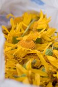 Drying arnica flowers