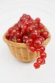 Redcurrants in basket
