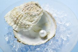 Pearl in oyster shell on crushed ice