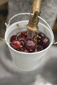 Washing cherries in bucket under tap