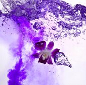 Vritz World (a purple drink made with violet)