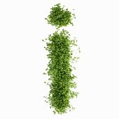 The letter i in cress