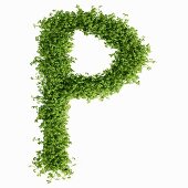 The letter P in cress