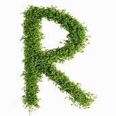 The letter R in cress