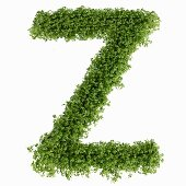 The letter Z in cress