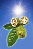 Noni fruits (Morinda Citrifolia)