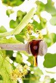 Lime blossom honey on honey dipper