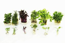 Various types of cress