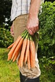 Farmer holding fresh carrots in garden
