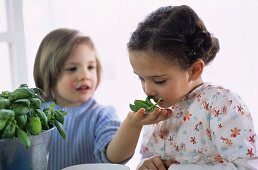 Two children with herbs in kitchen