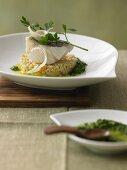 Haddock on pearl barley risotto with horseradish