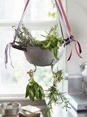 An old-fashioned colander of fresh herbs hanging up