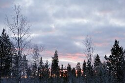 View of snow landscape of Lapland at sunset, Finland