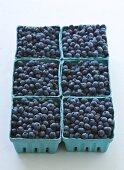 Six Cardboard Cartons of Blueberries