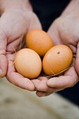 Hands holding brown eggs