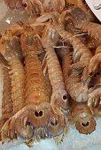 Canocchia (mantis shrimp) on ice