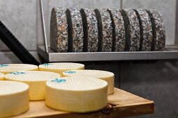 Mountain cheese in a dairy