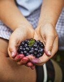 A boy holding freshly picked blackberries