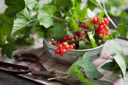 Redcurrants and leaves in a metal bowl
