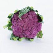 Purple cauliflower (brassica oleracea var. botrytis)