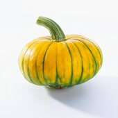 Kürbis (Cucurbita Maxima)