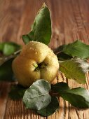 A quince with a twig