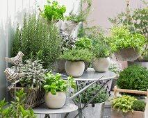 Fresh herbs in flower pots on a terrace