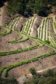 Terraces of vineyards in the wine growing region of Priorat, Catalonia