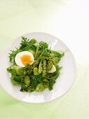 Spring salad with asparagus and egg