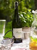 A bottle of Prosecco in front of a pot of basil