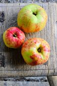 Three apples (Geheimrat Oldenburg, autumn apples)