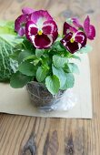 Pansies in a clump of soil
