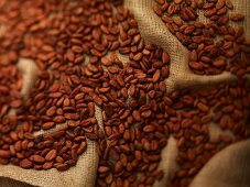 Cocoa beans on jute