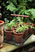 A steel basket with pot plants