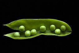 Organic Green Pea Pod Split Open