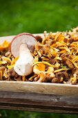 Fresh mushrooms in a wooden bowl