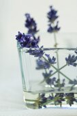 Lavender flowers in a glass of water