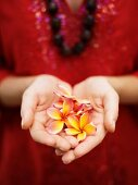 A woman's hands holding frangipane flowers