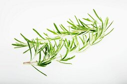 A sprig of rosemary