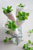Paper cones filled with peppermint