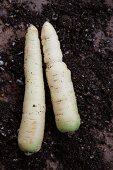 White carrots