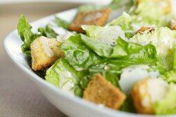 Caesar Salad in a Bowl; Close Up