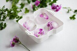 Scented pelargonium flowers frozen into spherical ice cubes