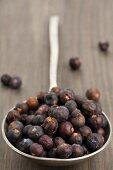 A spoon full of juniper berries