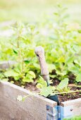 Small garden trowel in the soil of a vegetable bed