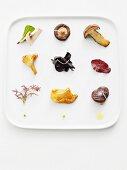 Wild mushrooms, raw and fried