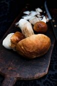 Fresh porcini mushrooms on a rustic scoop