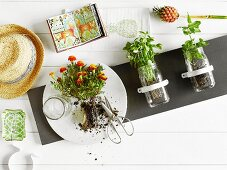 Preserving jars attached to grey panel and planted with herbs