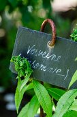 Fresh verbena in the garden with label (natural remedy for insomnia)